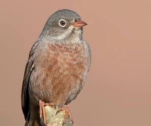 birds, bharat, and maharashtra image