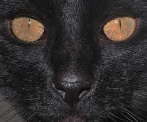 black, grunge, and cats image