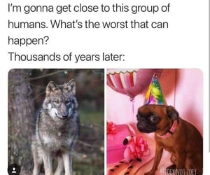 memes funny animals dogs image