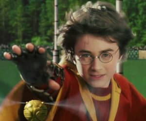 glasses, gryffindor, and harry potter image