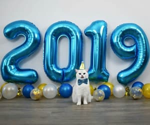balloons, blue, and cat image