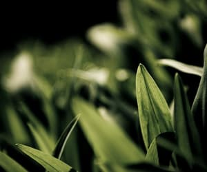 close up, grass, and photography image