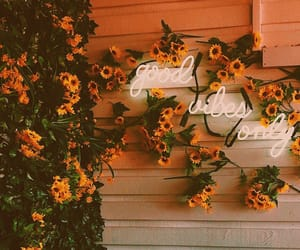flowers, neon, and yellow image