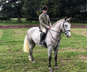 equestrian, grey, and horse image