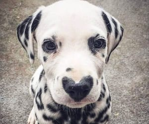 animals, black and white, and puppy image