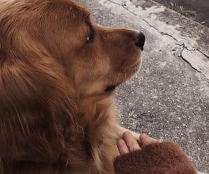 aesthetic, dog, and beige aesthetic image