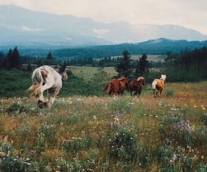 horse, nature, and animal image
