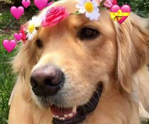 dogs, love, and 💕 image
