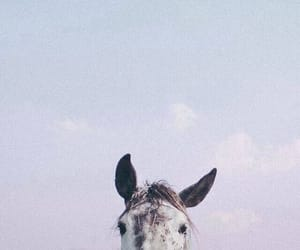 horse, animal, and sky image