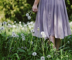 dandelions, flowers, and girl image