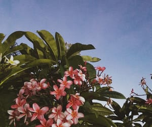 flowers, plants, and sky image