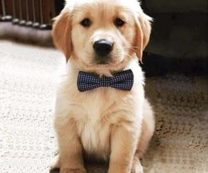 adorable, baby, and corbata image