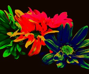 flowers, hrd effects, and filtered image