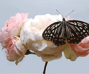 butterfly, vintage, and flower image
