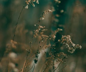 botanical, winter photography, and moody photography image