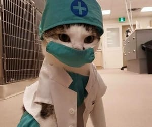 cat, cute, and doctor image