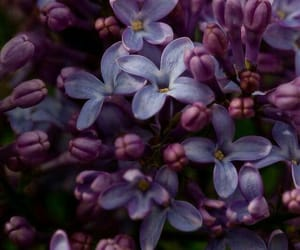 flower, lilac, and nature image