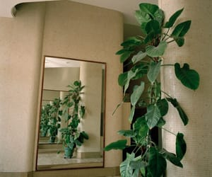 plants, green, and mirror image