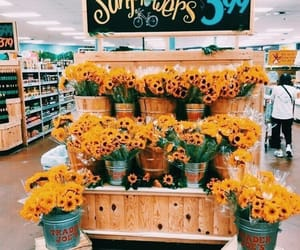 flowers, girassol, and sunflowers image