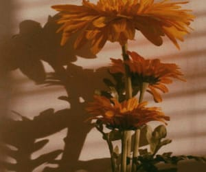 flower and shadow image