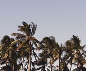 adventure, tropical, and hoy image