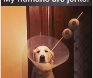 cute dog, dog, and humans image