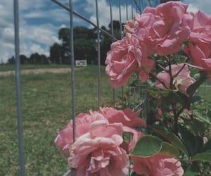 flower, nature, and natureza image