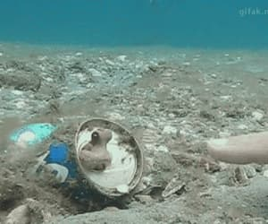 gif, underwater, and tiny octopus fist bump image