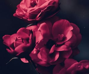 flowers, background, and red image