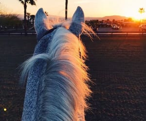 Dream, equine, and fashion image