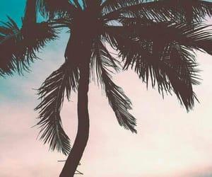 beach, palmtree, and summer image