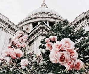 flowers, rose, and travel image