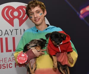 dogs, hoodie, and puppies image