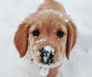dog, puppy, and snow image