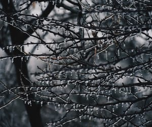 aesthetic, freeze, and outdoors image