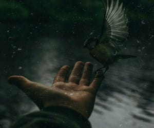 bird, hand, and in image