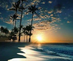 palmtree, sunset, and travel image