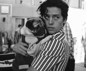 cole sprouse, riverdale, and dog image