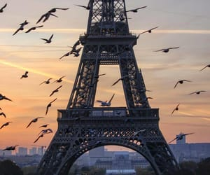 birds, france, and nature image