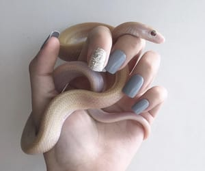 nails, reptile, and snake image