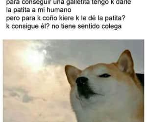dog, perro, and humano image