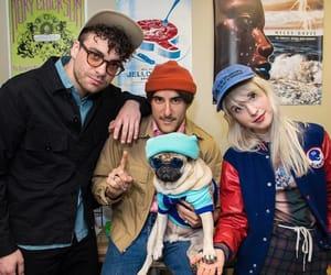 band, dog, and paramore image