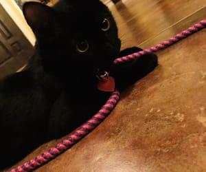 animals, salem, and blackcats image