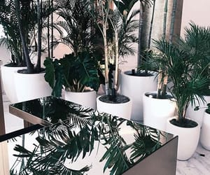 plants, decor, and green image
