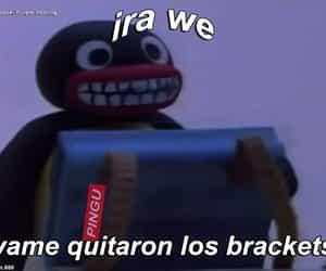 meme, pingüino, and braquets image