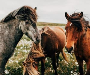 animal, horse, and nature image