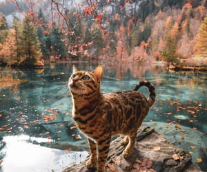cat, animal, and river image