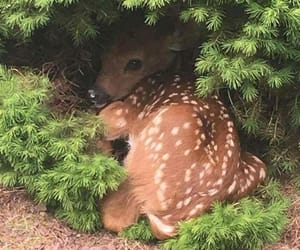 adorable, animals, and wild image