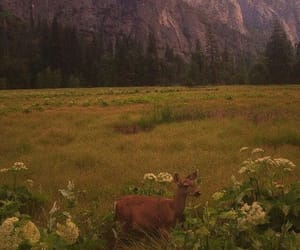 deer, forest, and mountains image