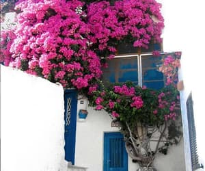 Greece, syros, and bougainvillea image